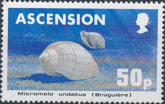 Ascension 1983 Sea Shells e.jpg