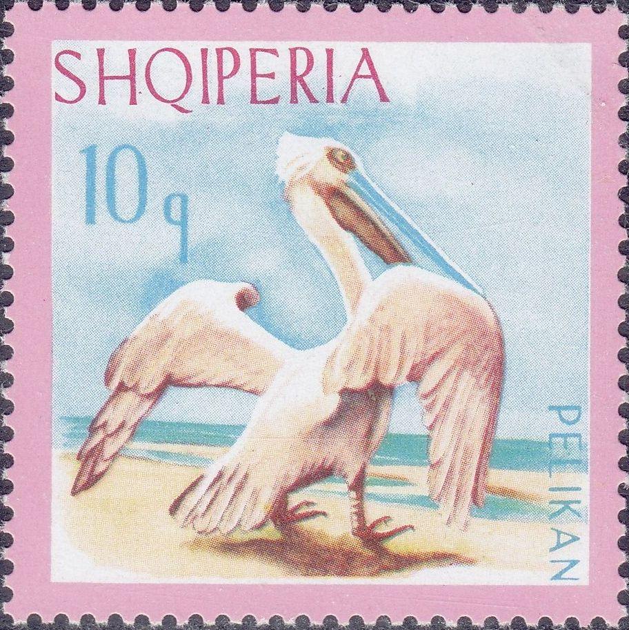 Albania 1967 Dalmatian Pelican