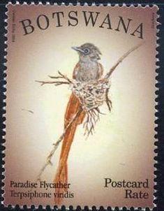 Botswana 2014 Birds j.jpg