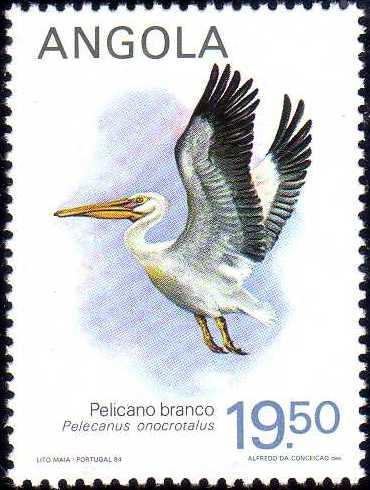 Angola 1984 Local Birds d.jpg