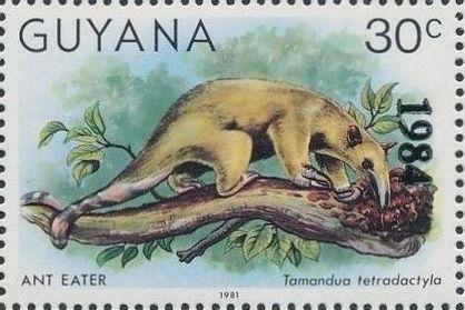 Guyana 1984 Wildlife (Overprinted 1984) h.jpg