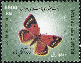 Iran 2005 Butterflies c.jpg