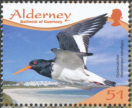 Alderney 2009 Resident Birds Part 4 (Waders) c.jpg