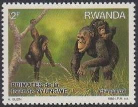 Rwanda 1988 Primates of Nyungwe Forest