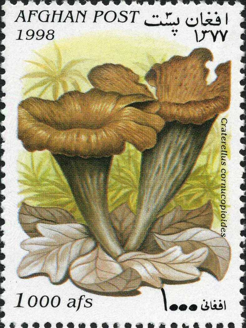Afghanistan 1998 Mushrooms d.jpg