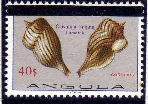 Angola 1981 Sea Shells Overprinted m.jpg