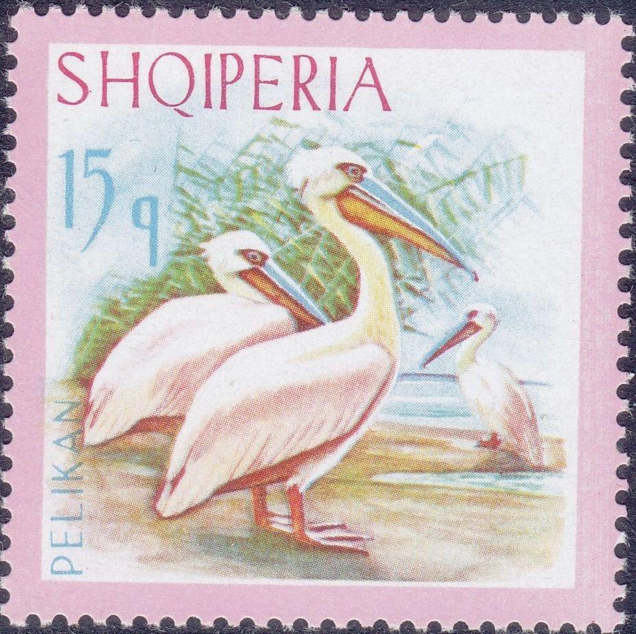 Albania 1967 Dalmatian Pelican b.jpg