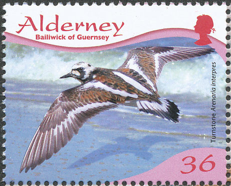 Alderney 2009 Resident Birds Part 4 (Waders)