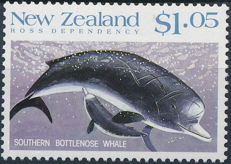 New Zealand 1988 Whales of the Southern Oceans e.jpg