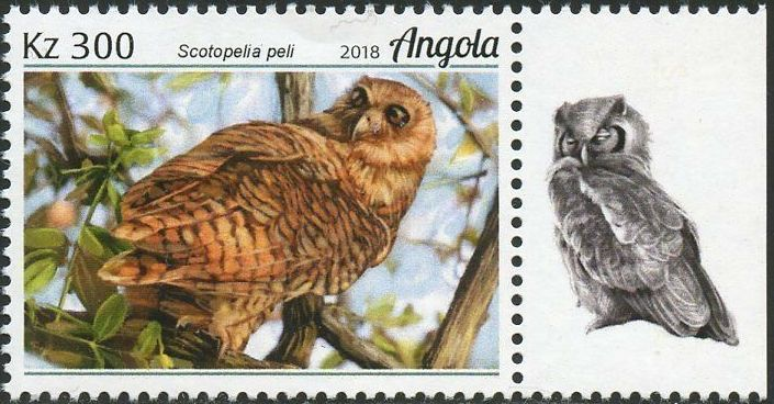 Angola 2018 Wildlife of Angola - Owls