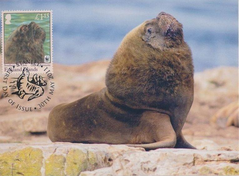 Falkland Islands 2011 WWF - The Southern Sealion MCd.jpg