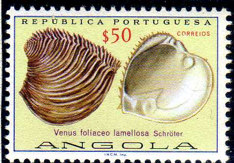 Angola 1974 Sea Shells c.jpg