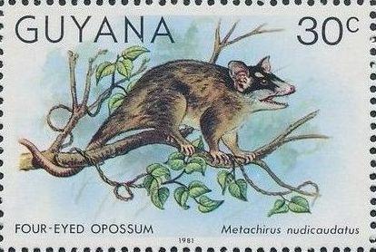 Guyana 1981 Wildlife k.jpg