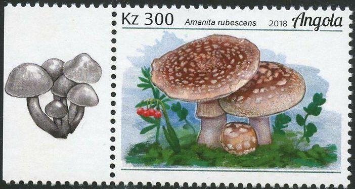 Angola 2018 Wildlife of Angola - Mushrooms b.jpg