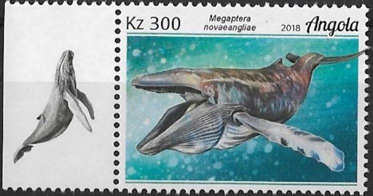 Angola 2018 Wildlife of Angola - Whales b.jpg