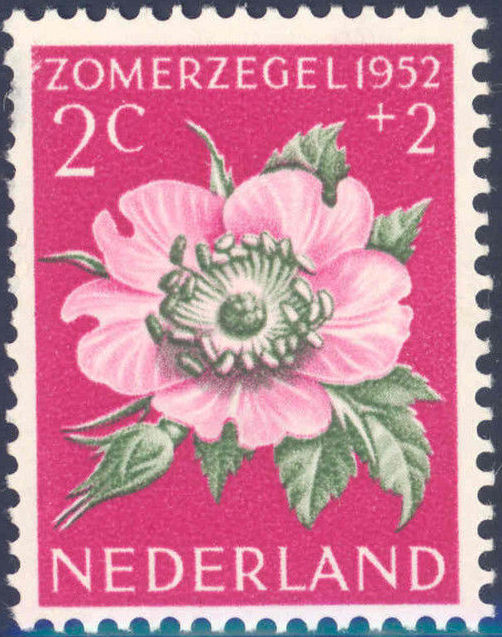 Netherlands 1952 Surtax for Social, Cultural and Medical Purposes