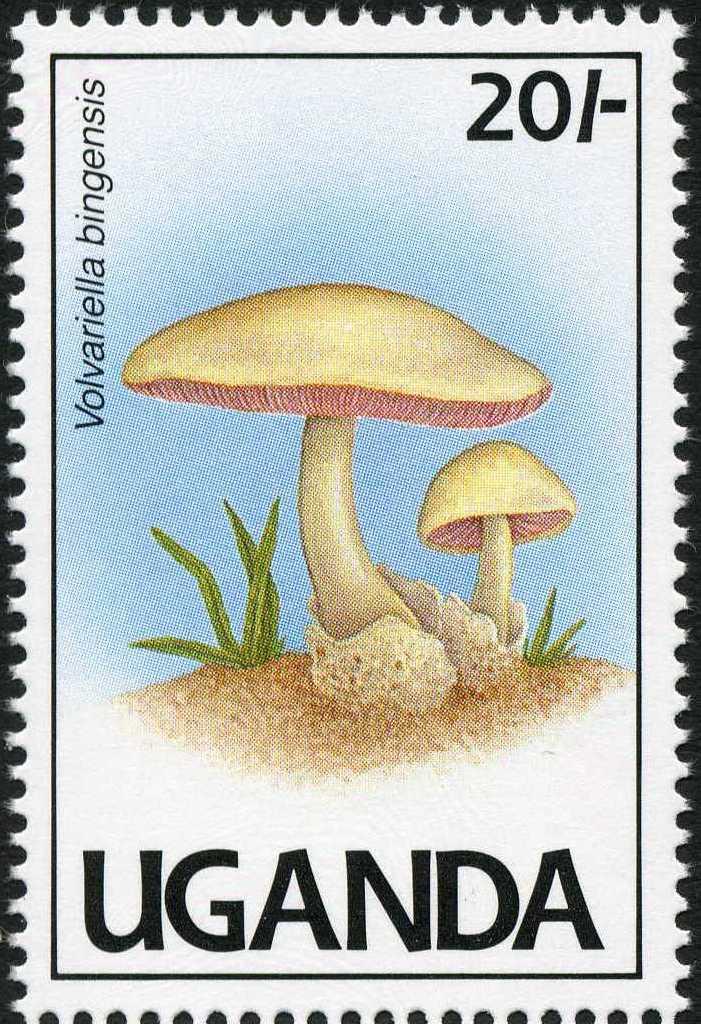Uganda 1991 Mushrooms of Uganda