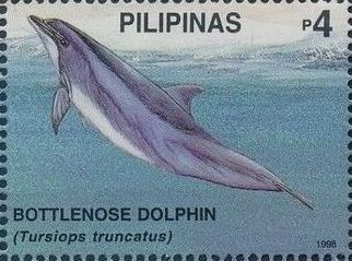 Philippines 1998 Marine Mammals Found in Philipines Waters