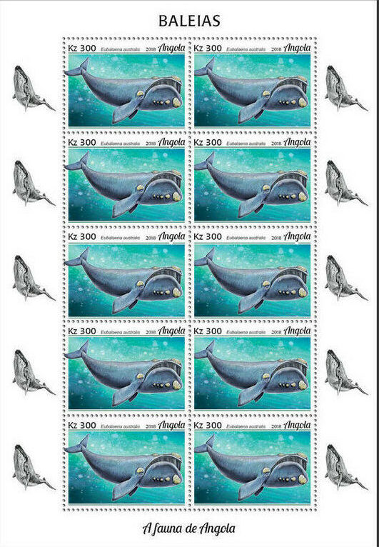 Angola 2018 Wildlife of Angola - Whales Sc.jpg