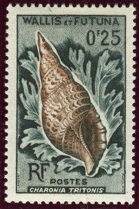 Wallis and Futuna 1962 Sea Shells