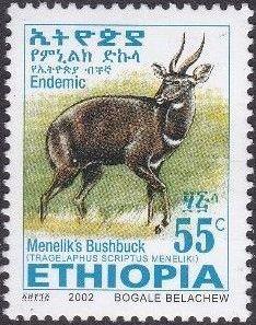 Ethiopia 2002 Menelik's Bushbuck k.jpg