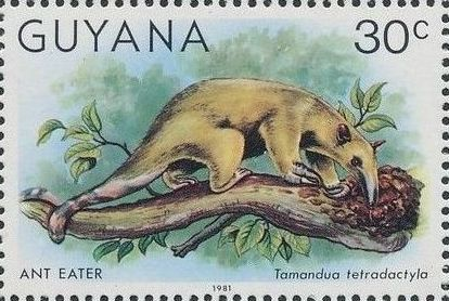 Guyana 1981 Wildlife h.jpg