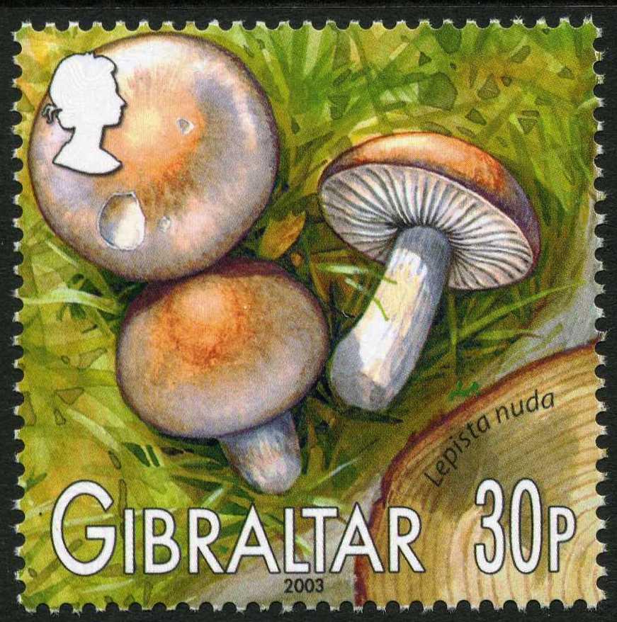Gibraltar 2003 Mushrooms of Gibraltar