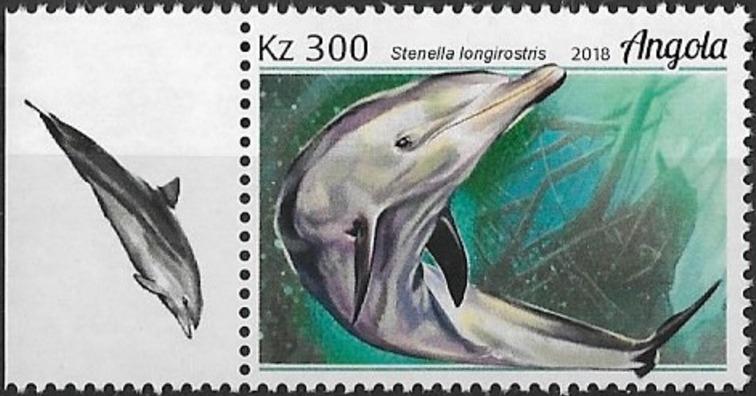 Angola 2018 Wildlife of Angola - Dolphins c.jpg