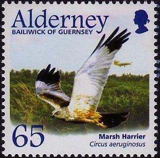 Alderney 2002 Migrating Birds Part 1 Raptors f.jpg