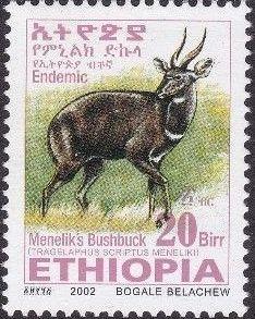 Ethiopia 2002 Menelik's Bushbuck y.jpg