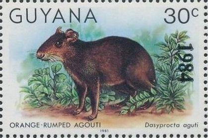 Guyana 1984 Wildlife (Overprinted 1984) l.jpg