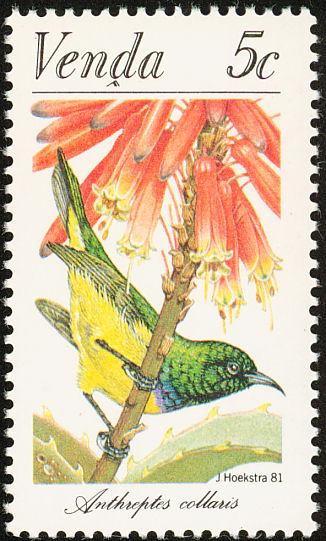 Venda 1981 Sunbirds