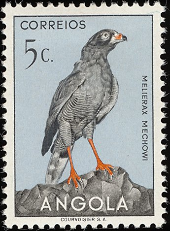 Angola 1951 Birds from Angola a.jpg