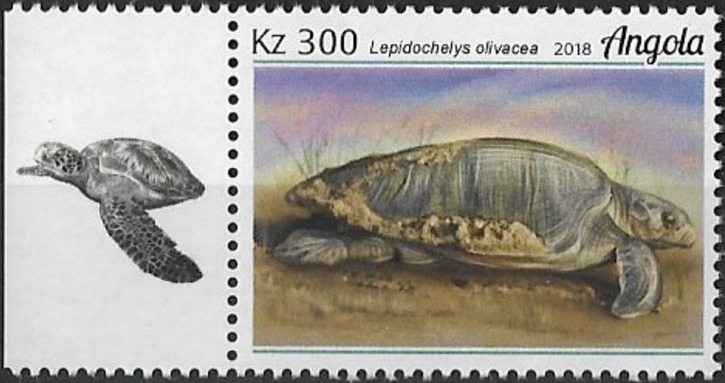 Angola 2018 Wildlife of Angola - Turtles b.jpg