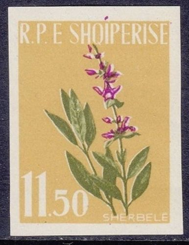 Albania 1962 Medicinal Plants f.jpg