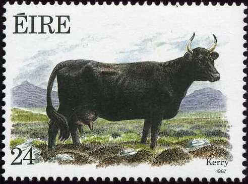 Ireland 1987 Irish Cattle a.jpg