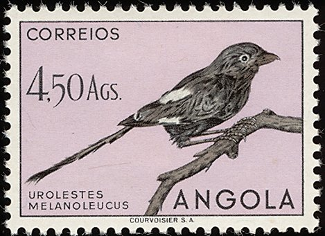 Angola 1951 Birds from Angola m.jpg