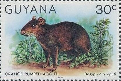 Guyana 1981 Wildlife l.jpg