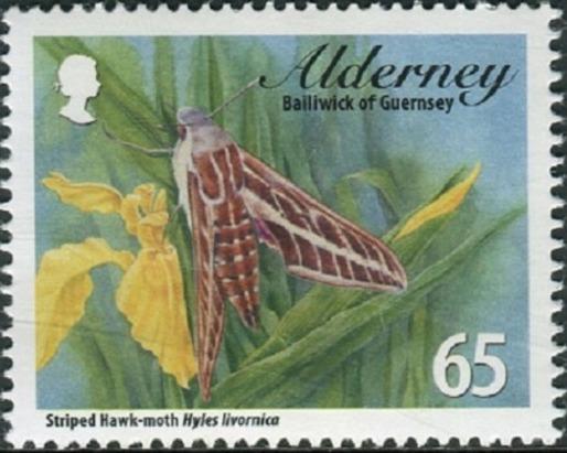 Alderney 2011Alderney Hawkmoths