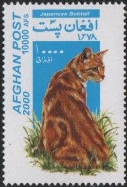 Afghanistan 2000 Cats