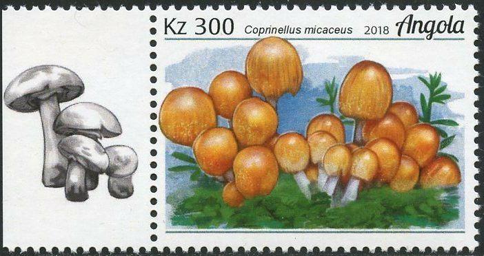 Angola 2018 Wildlife of Angola - Mushrooms c.jpg