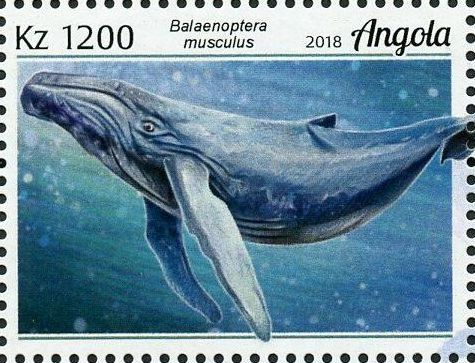 Angola 2018 Wildlife of Angola - Whales e.jpg