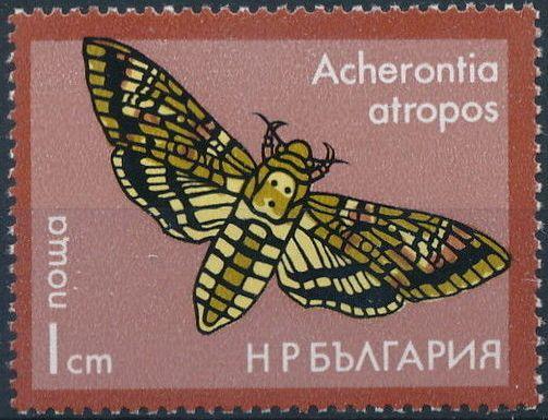 Bulgaria 1975 Moths