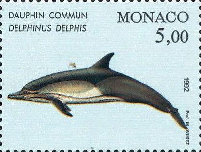 Monaco 1992 Musée Océanographique - Cétacés de la Méditerranée (1st Group) b.jpg
