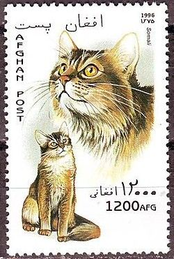 Afghanistan 1996 Cats f.jpg