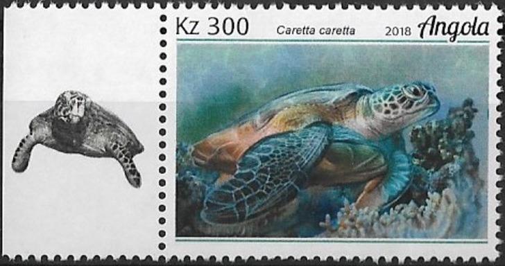 Angola 2018 Wildlife of Angola - Turtles d.jpg