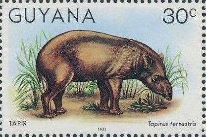 Guyana 1981 Wildlife e.jpg