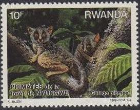 Rwanda 1988 Primates of Nyungwe Forest c.jpg