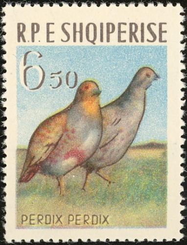 Albania 1963 Birds c.jpg