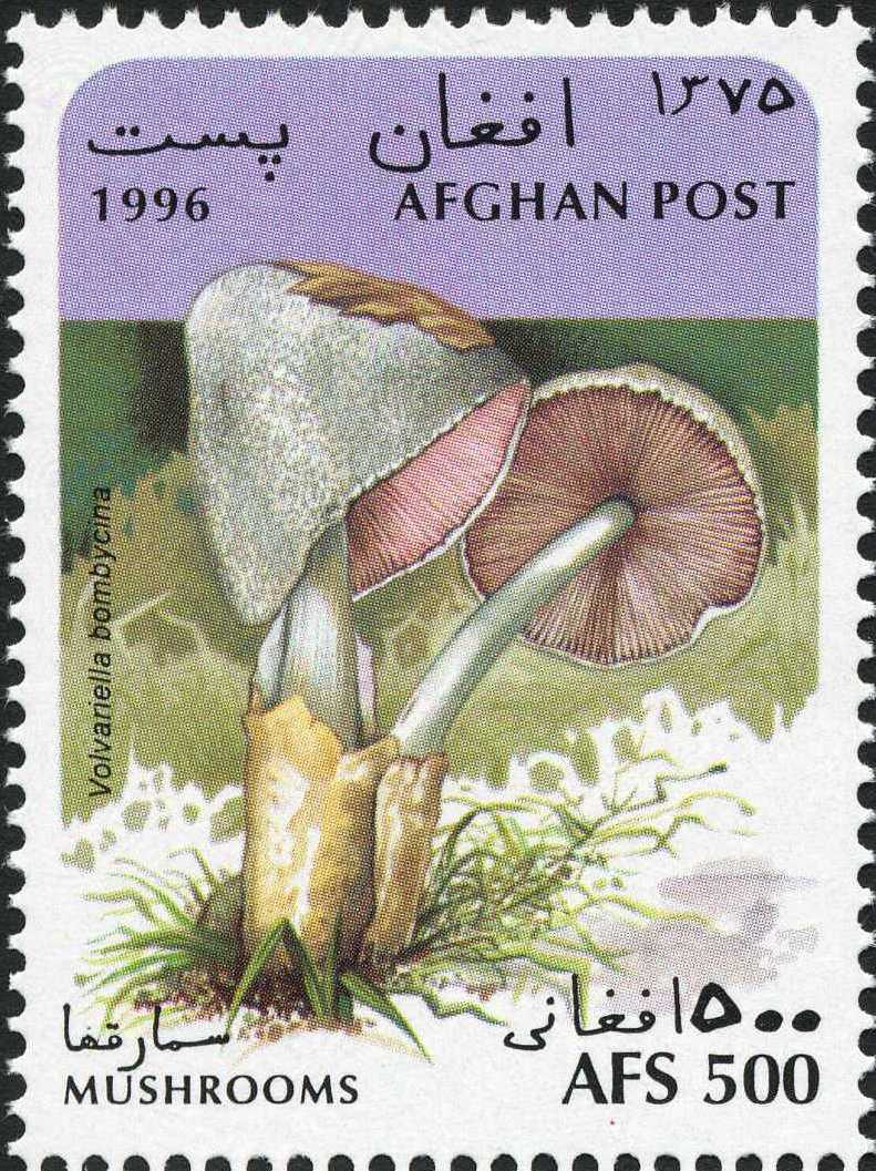 Afghanistan 1996 Mushrooms d.jpg